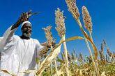 مدير هيئة السوكي الزراعية:الموسم الزراعي يسير بصورة طيبة