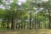 الغابات بولاية سنار تحتفل بعيد الشجرة الـ(58) بفنقوقة الجبل
