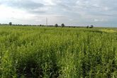 (8) مليون جالون جازولين حاجة شمال كردفان للموسم الزراعي