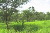 غابات شمال كردفان تستهدف زراعة 5 آلاف فدان بالاحزمه الشجرية