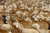 الثروةالحيوانية تنفي رجوع بواخر من صادر الماشية الأيام السابقة