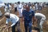 ولاية سنار تدشن  موسم زراعة قصب السكر